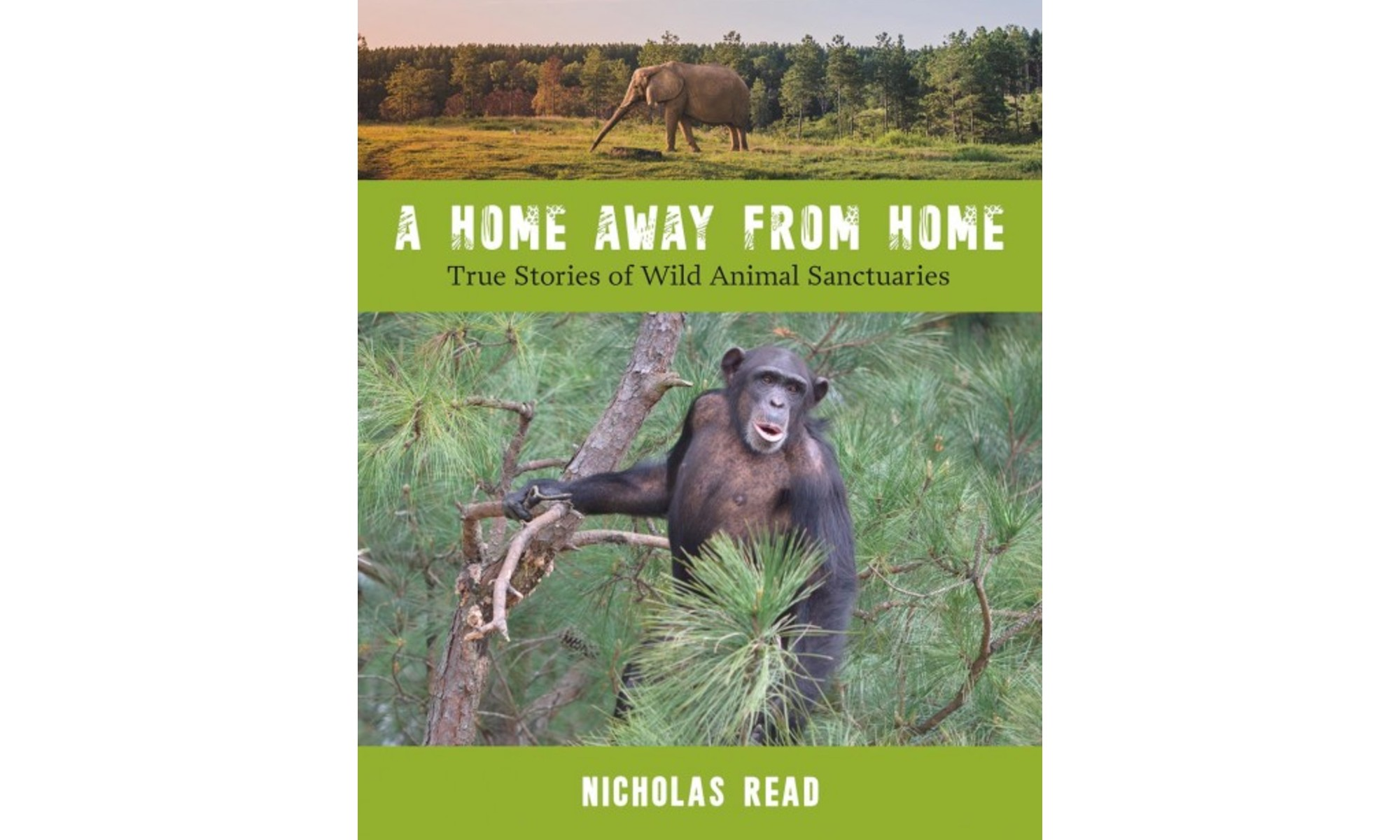 The cover of A Home Away From Home by Nicholas Read